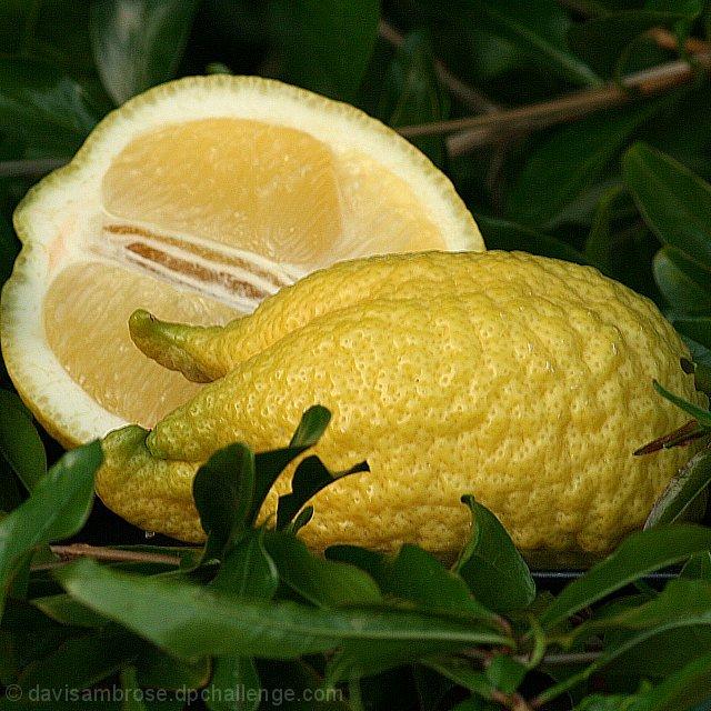 Lemon Chicken? Not quite so!