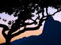 The Redeemer Tree