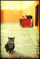 Tournée du Chat