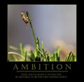 Ambition - Once you've made it to the top, be prepared to be the first mowed down.
