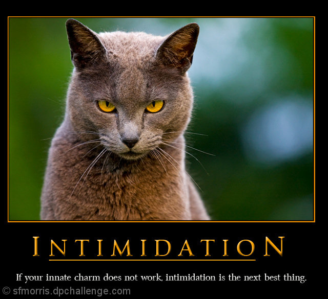 Image result for intimidation