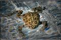 Frog Dip