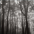 ..A misty morning in the forest
