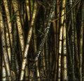 Bamboo Graffitti