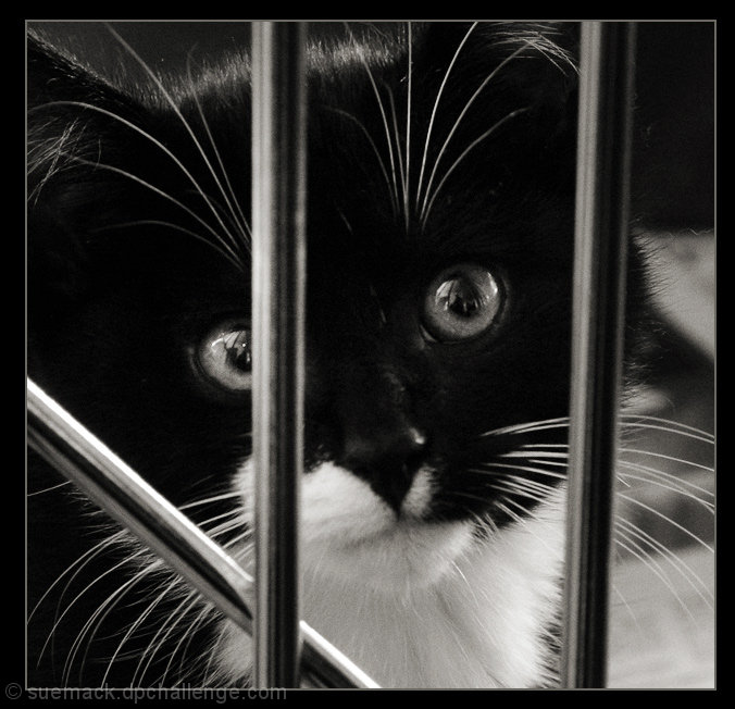 kitty in a cage