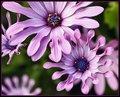 Valse des Fleurs