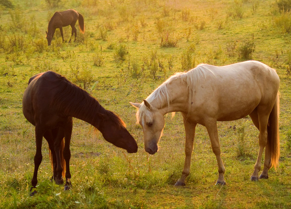 all the pretty horses mccarthy pdf