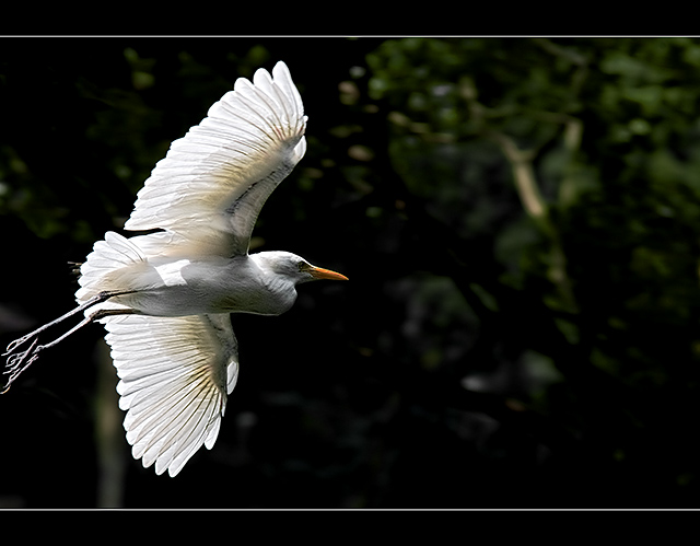 - Flight of the Heron -