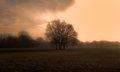 Foggy Pasture at Sunrise