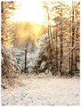 Winter Powerline