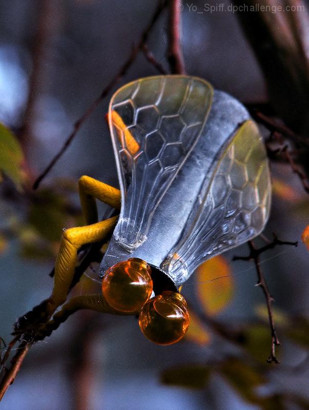 Metallus Loscorus, the common Shoehorn Fly