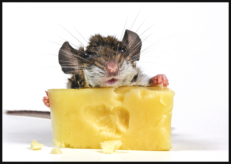 """""""Oh, thanks! ...  I LOVE cheese..."""""""