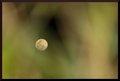 Moon through green