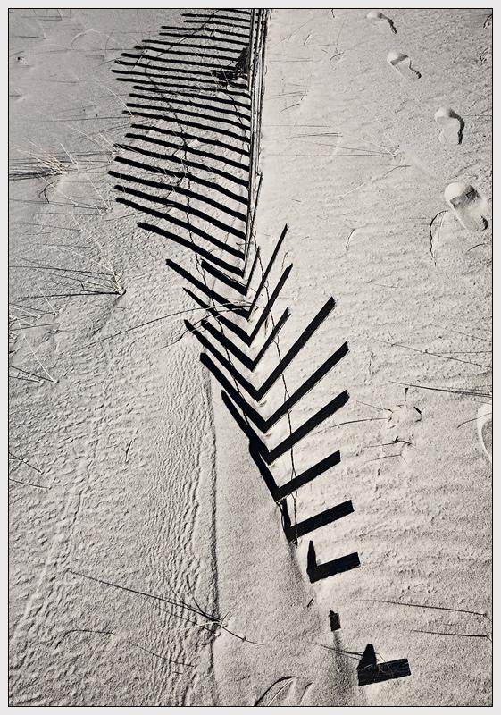 Dune Fence, Lighthouse Beach