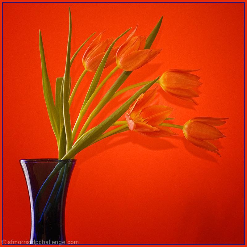 The Beauty of Orange