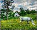 Mare & Barn