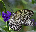 """""""Butterfly and Bokeh"""""""