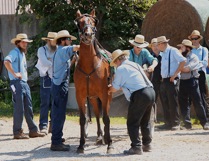 The Horse Auction