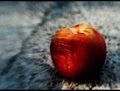 Shadow on Peach