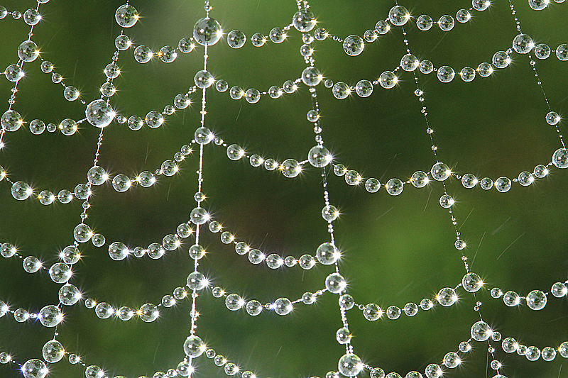 Oversaturated air - how the morning fog decorates a spider web