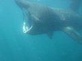 Underwater Basking