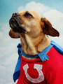 UNDERDOG- Here he comes to save the day!