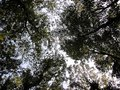 Under the Canopy