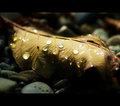 Fall Gems