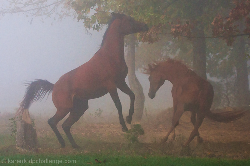 Duel in The Fog
