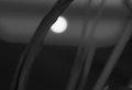 Full moon view through the tall grass