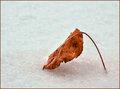 December Leaf