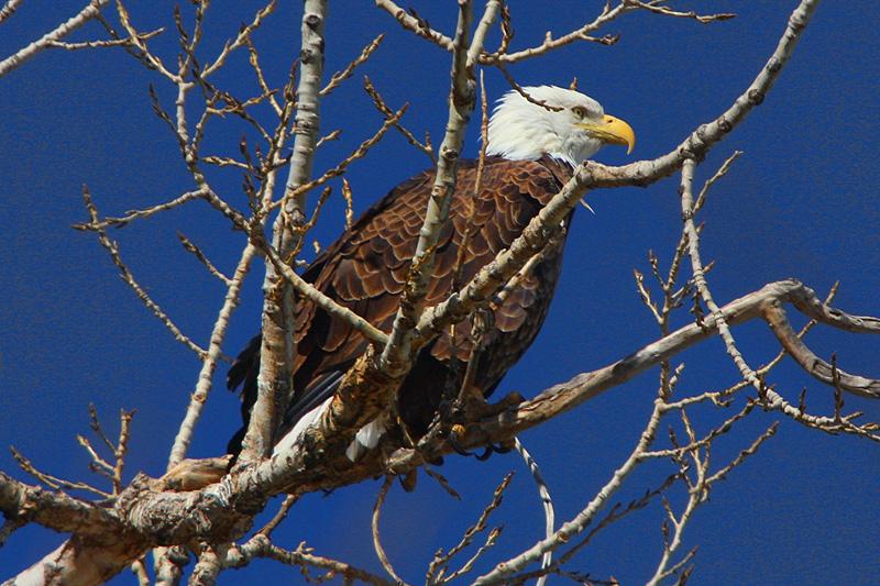 Eagle landed near my house