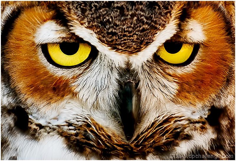 Whoooo You Looking At???