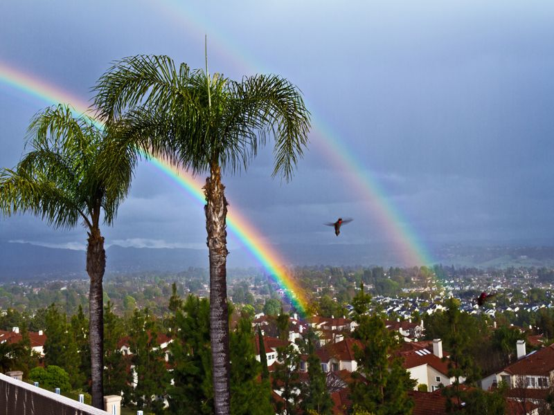 Hummer Between Two Rainbows (All In One Capture)