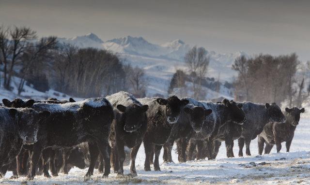 Montana Ranch,  16 Below zero