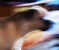 half focused - half an image - half a mastiff