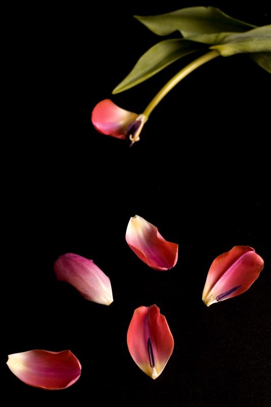 Love Me, Loves Me Not, Loves Me....Stupid Flower