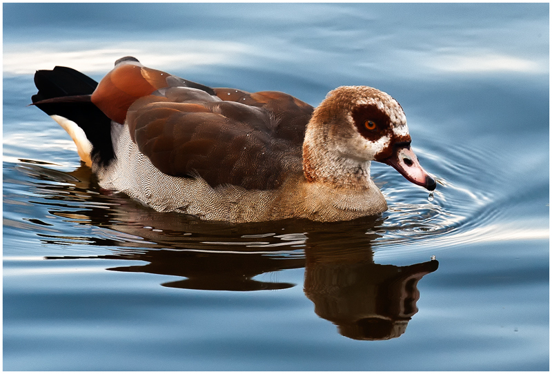 Duck late afternoon...