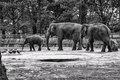 (Elephant) March