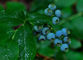 Fruit Of The Month - June Blueberries