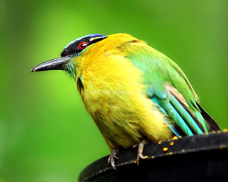 June:  Bird's-eye view