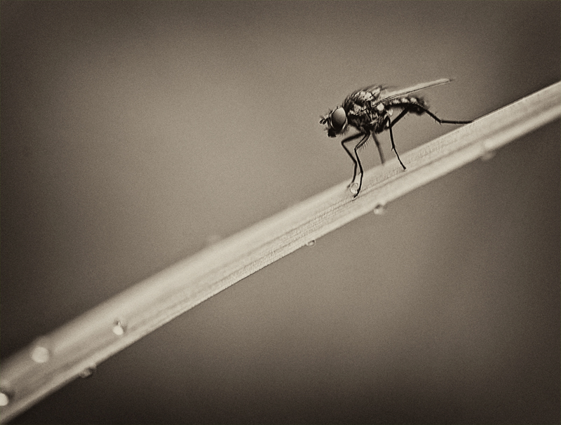June - First Mosquito
