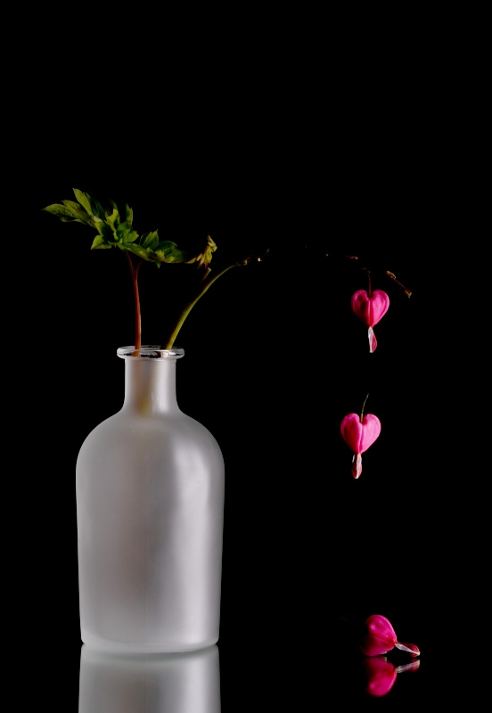 Bleeding Hearts - Symbol of Lost Love