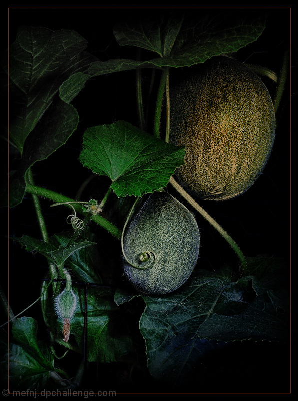 Do The Melons Still Grow In The Pale Moonlight?