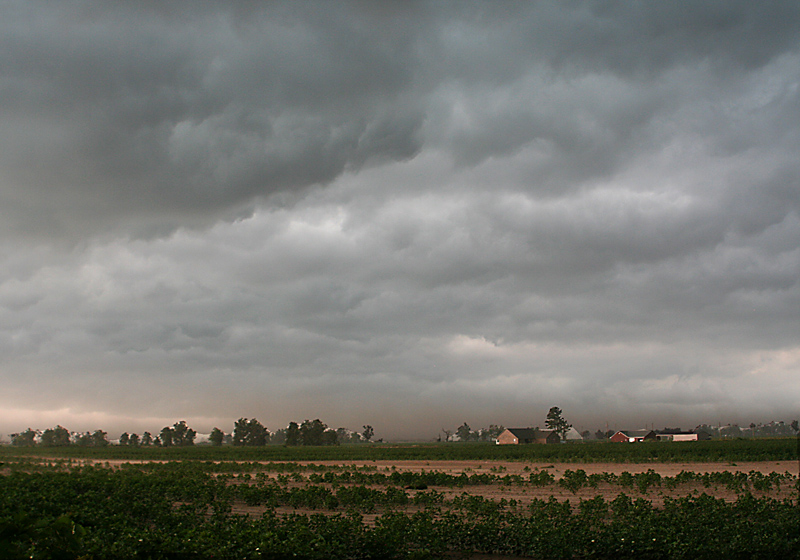 Clouds Covering Cotton