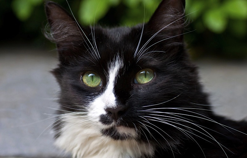 (Cat) Emerald Eyes