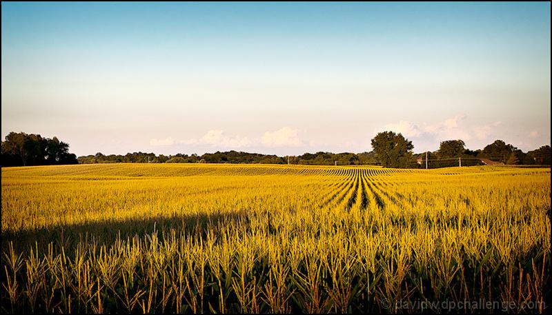 In the Corn