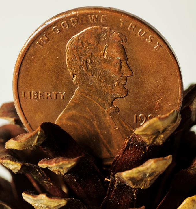 Coin in Cone