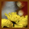Blur Inspiration from Shez Johnston