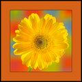 A Flower for Shez